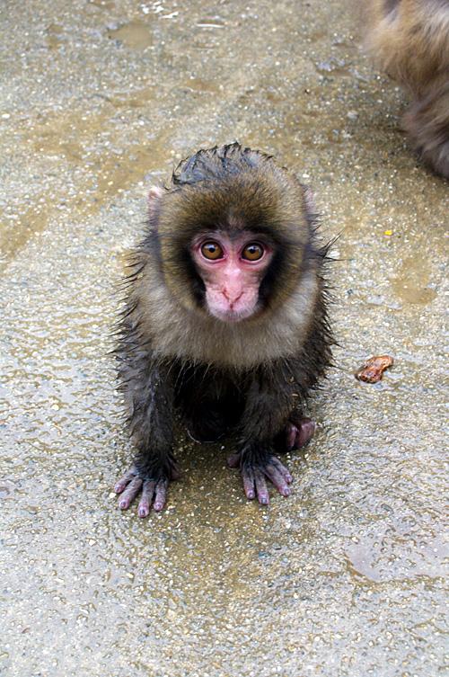 子猿.jpg