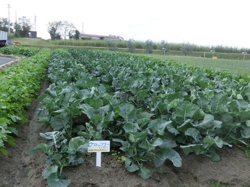 野菜CIMG5064.JPG
