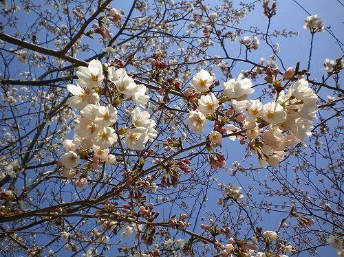 s-春祭り11.jpg