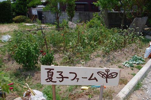 s-花野5.jpg