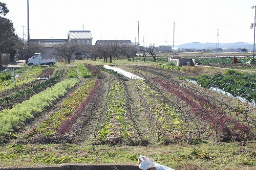 s-西洋野菜5.jpg