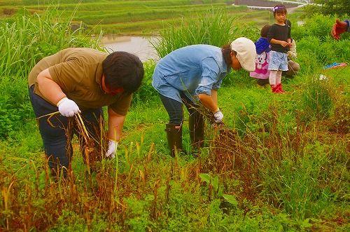 ニンニク収穫報告2.jpg