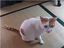 猫M.jpg