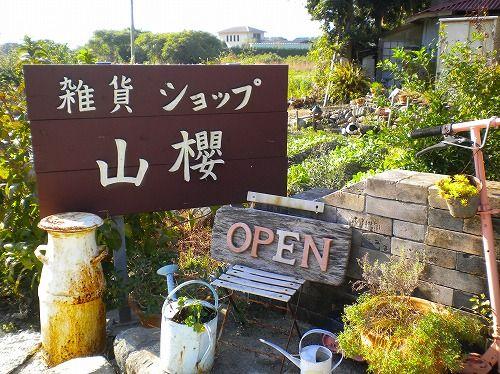 s-山桜11.jpg