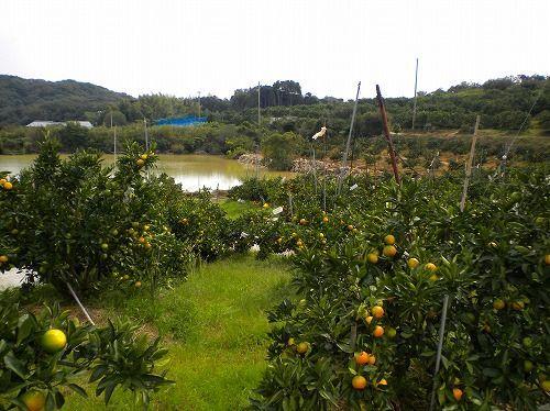 s-平岡農園6.jpg