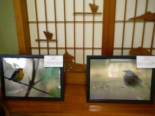 s-野鳥展3.jpg